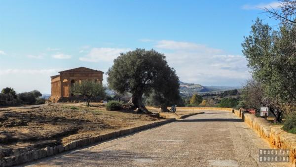Świątynia Zgody, Agrigento - Sycylia