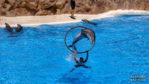 Teneryfa - Loro Park (pokaz z delfinami)