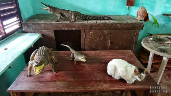 Nie tylko krokodyle - Kuba