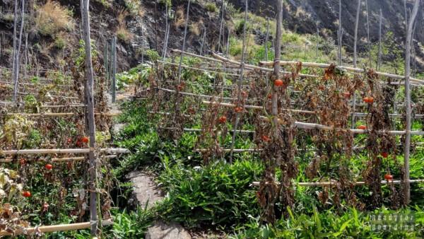 Poletka u podnóży klifu - Madera