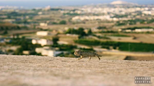 Taras widokowy, Mdina - Malta