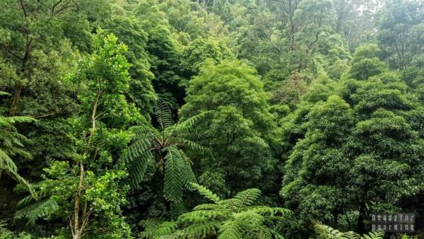 Caldeira Velha - Azory