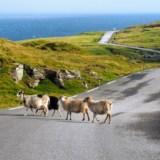 Wyspy Owcze – praktyczne podsumowanie wyjazdu na Faroje