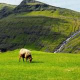 Wyspy Owcze – tam, gdzie owiec jest więcej niż ludzi