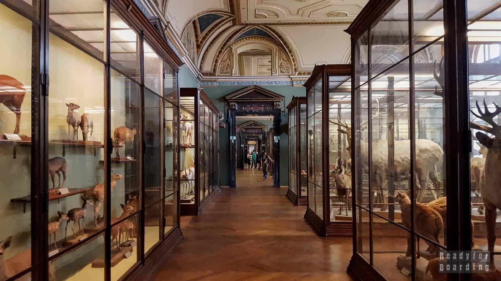 Muzeum Historii Naturalnej, Wiedeń - Austria