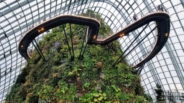 Spacer w chmurach w Cloud Forest, Gardens by the Bay - Singapur