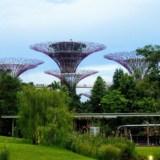 Singapur – informacje praktyczne (komunikacja miejska, internet, jedzenie)