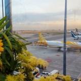 Lotnisko Singapur Changi – najlepsze lotnisko na świecie?