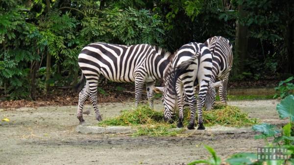 Zoo, Singapur