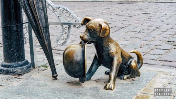 Pies Filuś, Toruń, Polska