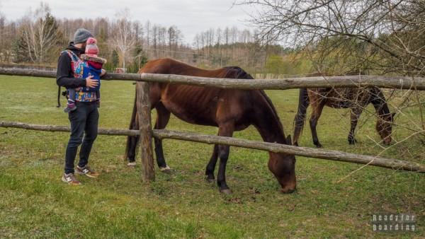 Konie w Zaborku
