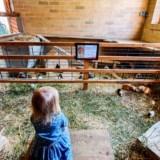 Tierpark-Zoo Gorlitz – ogród zoologiczny inny niż wszystkie
