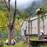 Pandy w Chinach, gdzie jechać? Opis 3 ośrodków + film